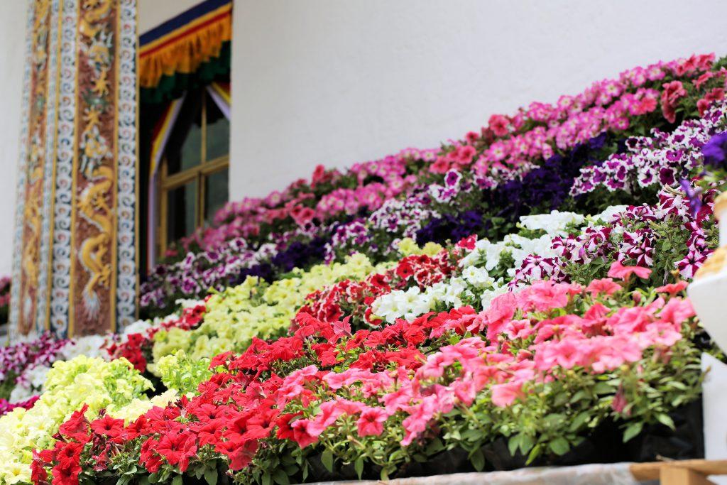 花々で美しく飾られたチョルテン(仏塔)